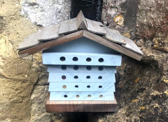 The bee box