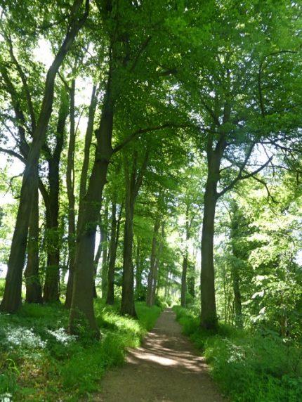 Castle Combe Woodland path